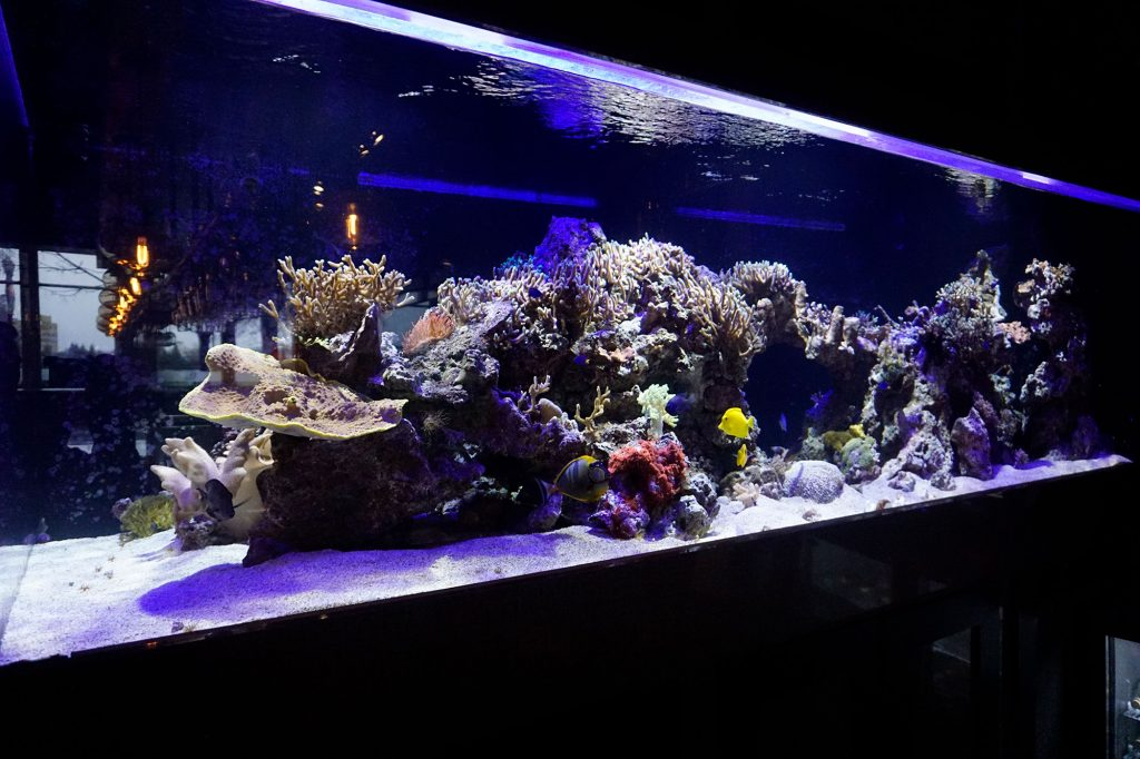 Side view of an aquarium