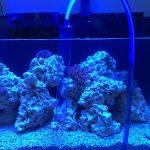 Red Sea Reefer Aquarium