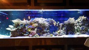 Coral Husbandry